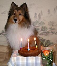 ヴィエリ誕生日おめでとうでしっ