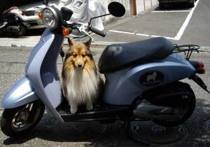 ヴぃーちゃんのバイク