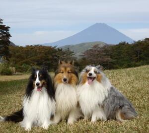 富士山帽子被ってないね