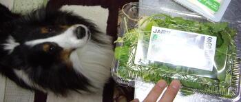 草を食べるとおいしいの??